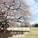 さくら開花情報 2014/03/30(日) 新宿御苑