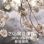 さくら開花情報 2014/03/31(月) 新宿御苑