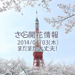 さくら開花情報 2014/04/03(木) まだまだ大丈夫!